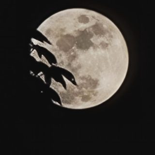 Somewhere out there  a werewolf went aaaawwwooooooooo!   You did that dint you?   #fullmoon  #fullmoonnight  #fullmoonphotography